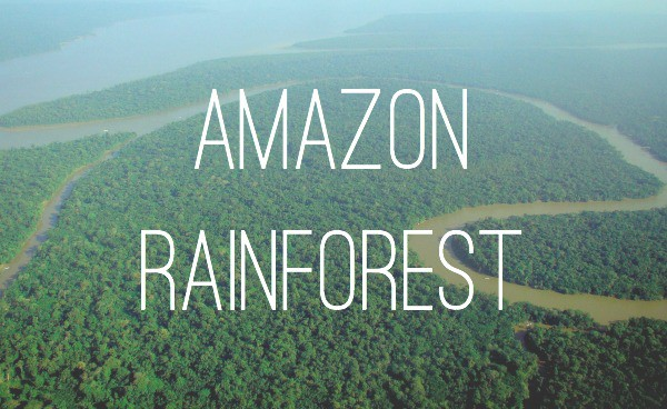 Image result for the amazon rainforests title